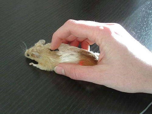 Name:  computer_mouse_.jpg Views: 257 Size:  37.8 KB