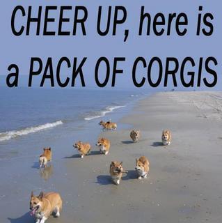 Name:  corgis.jpg Views: 147 Size:  15.9 KB