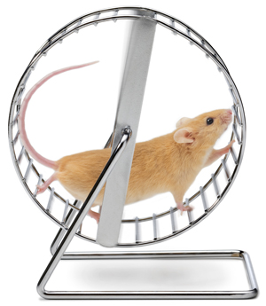 Name:  mouse-on-wheel.jpg